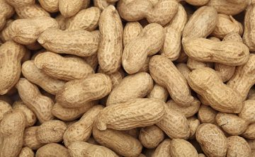 Supplier of Peanuts in India - Papa Global
